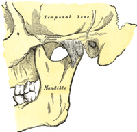 Ricostruite artificialmente le articolazioni temporo-mandibolari